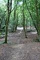 Forest @ Roc de Chère @ Talloires (34836766753).jpg