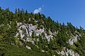 Forest close to Hesshütte, Gesäuse National Park, Ennstaler Alpen, Austria.jpg