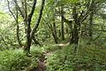 Forest in Doshi 17.jpg