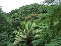 Forested slopes of Rarotonga (7189146883).jpg