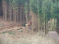 Forestry Clearance - geograph.org.uk - 724450.jpg