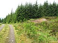Forestry track, small ad-hoc source of gravel for track repair on right - geograph.org.uk - 844019.jpg
