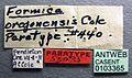 Formica oregonensis casent0103365 label 1.jpg