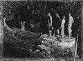 Four people standing on large kauri stump (AM 88386-1).jpg