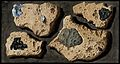 Four specimens of tufa from the quarries near the Grotto of Wellcome V0025286.jpg