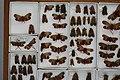 Fulgoridae Drawers - 5036087363.jpg