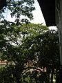FvfMalacanangMuseum0040 02.JPG