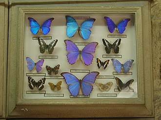 Manial Palace and Museum - Manial Palace Museum, the Prince's vintage butterfly collection