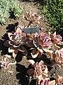 Gardenology.org-IMG 0528 hunt07mar.jpg