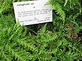 Gardenology.org-IMG 2358 rbgs11jan.jpg