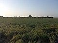 Garej Ghed Dist.Porbandar Photo By Raju Odedra Mo.7698787895 - panoramio - Raj Odedra.jpg