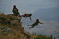 Geladas in Ethopian Highlands.jpeg