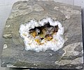 Geode with barite, dolomite, and quartz (Monroe County, Ohio, USA) (32234461440).jpg