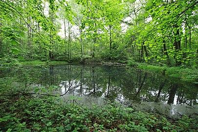 Geschützter Landschaftsbestandteil Schubertgrund in Sachsen. 2H1A1074WI.jpg