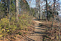 Gfp-missouri-castlewood-state-park-forest-path.jpg