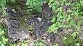 Gilova bosko 03-07-2020 (01) 14.jpg