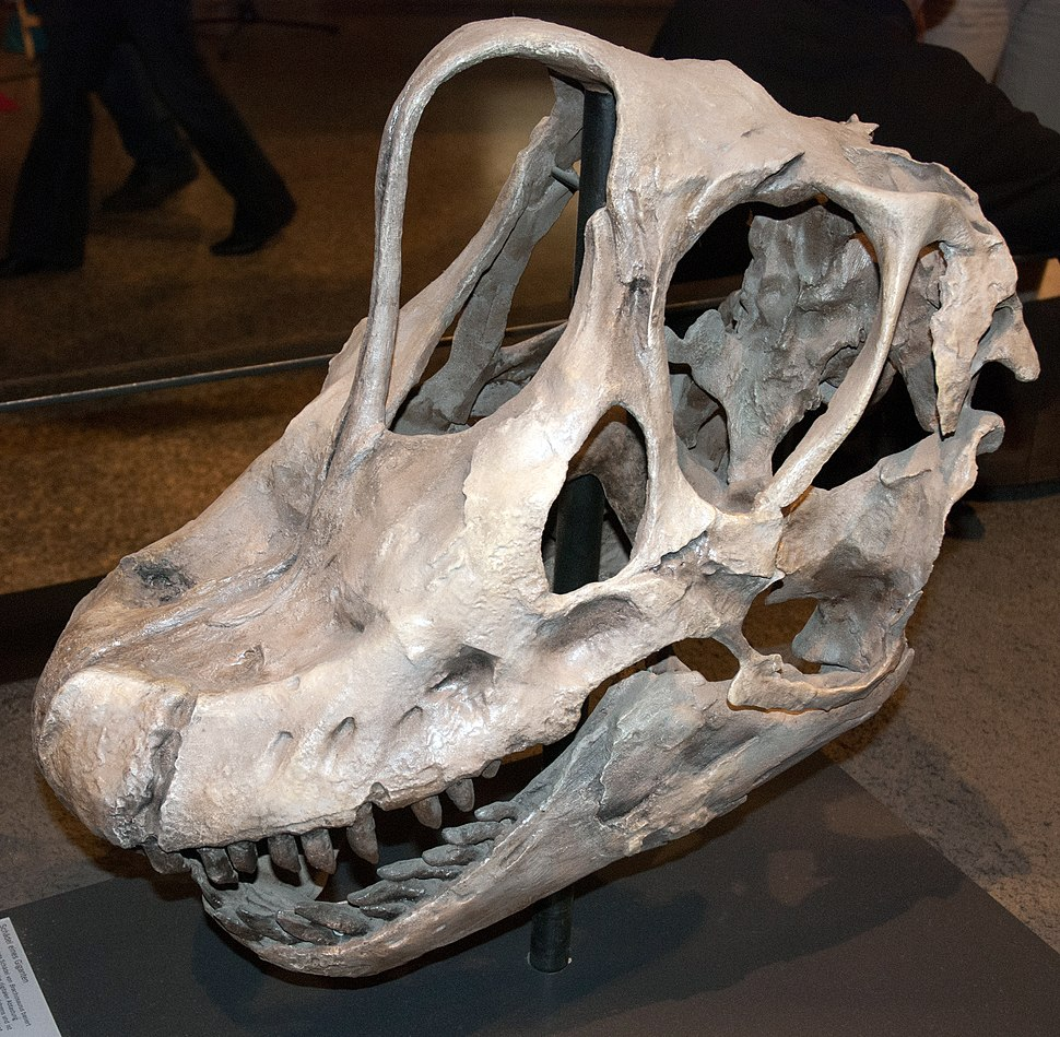 Giraffatitan skull in Berlin