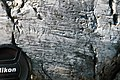 Glacial striations from Pleistocene glaciation on dolostone (Dunham Dolomite, Lower Cambrian; Route 2 roadcut, southeast of the Lamoille River bridge, Vermont, USA) 18.jpg