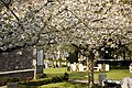 Glasnevin Cemetery - (442803997).jpg