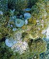 Glover's Reef 2-14 (33297605825).jpg