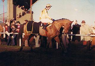 Golden Cygnet Irish-bred Thoroughbred racehorse