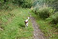 Grand Union Canal towpath near Welsh Road lock - geograph.org.uk - 1416578.jpg