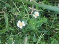 Grass flowers - 9.jpg