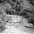 Graven op de begraafplaats in de Jodensavanna, Bestanddeelnr 252-6459.jpg