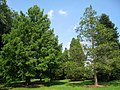 Graver Arboretum - 344.jpg