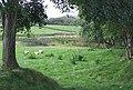Grazing Land by the Afon Teifi, Ceredigion - geograph.org.uk - 565385.jpg