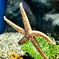 Greater Cleveland Aquarium (19573239106).jpg