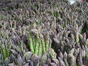 Green asparagus for sale in New York City