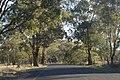Gulgong NSW 2852, Australia - panoramio (80).jpg