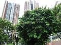 HK Chai Wan Park trees facades Sept-2012.JPG