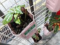 HK SYP 西營盤 Sai Ying Pun 水街 Water Street 小盤栽 green plants October 2020 SS2 01.jpg