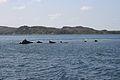 HMS Port Napier wreck 12.jpg