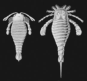 https://upload.wikimedia.org/wikipedia/commons/thumb/5/5f/Haeckel-Eurypterida1024.jpg/290px-Haeckel-Eurypterida1024.jpg