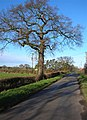Hagg Lane - geograph.org.uk - 292661.jpg