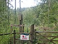 Hallowell Woods - geograph.org.uk - 39989.jpg