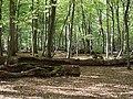 Hambach forest 41.jpg