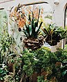 Hanging plants key largo.jpg
