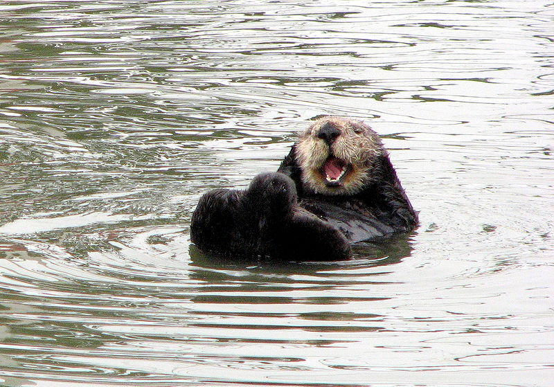 File:Happy otter.jpg