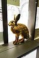 Hare (25621295437).jpg