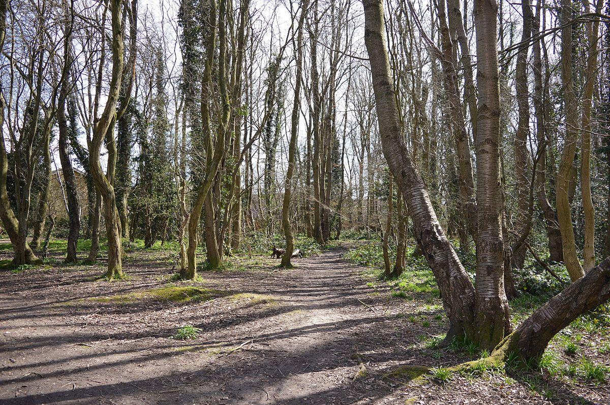 Harebreaks Wood Wikipedia