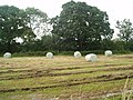 Haylage bales at Blue Slates Farm - geograph.org.uk - 496888.jpg