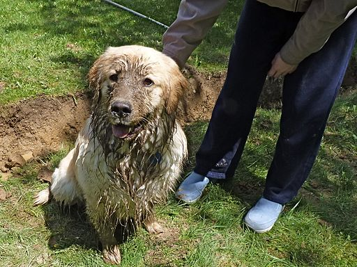 He could not be happier (4689036821) How To Stop Your Muddy Dog Ruining Your House