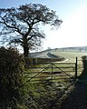 Hedge near Lindridge - geograph.org.uk - 762212.jpg