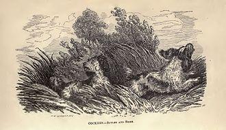 """Henry William Herbert - Cocker Spaniels from Herbert's """"The Dog"""""""