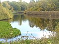 Herbst an der Buschgrabensee (Autumn at Buschgrabensee) - geo.hlipp.de - 29605.jpg