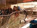 Herrerasaurus at the CMNH 2.jpg